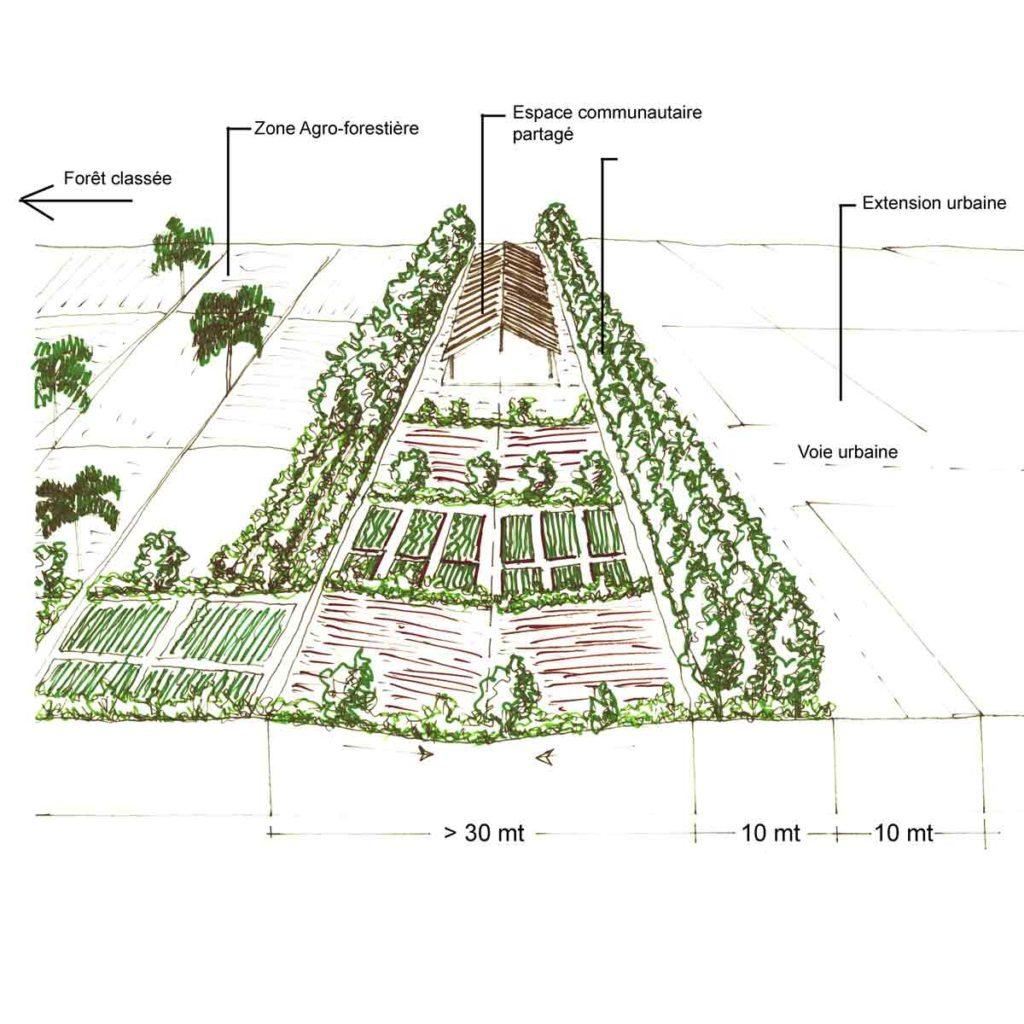 thies étude orizhome horticulture